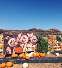 Irvine Pumpkin Patch Tanaka by The Best Pumpkin Patch In The Oc Socalthrills Com