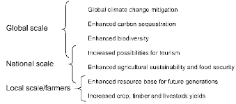 Define The Word Carbon Sink by Carbon Sequestration In Dryland Soils