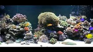 fond ecran aquarium 2 vidéo dailymotion