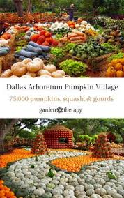 Pumpkin Patch Waco Tx 2015 by This Village Is Made Entirely Of Pumpkins Dallas Texas And Autumn