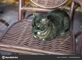 Black Cat Sits Wicker Rocking Chair — Stock Photo © Alarich ...