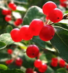 Winterberry Christmas Tree Farm Pa by Saratoga Woods And Waterways Midday Madness Shady Trail