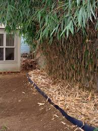 How Do I Get Rid Of Bamboo In My Backyard - The Best Home Design Ideas Design My Backyard Full Image For Ergonomic Garden With Outdoor Best 25 Kid Friendly Backyard Ideas On Pinterest Beautiful Landscaping Designs Youtube Cheap Solar Lights Im Finally In The Mood To Do A Little Writingso Ill Talk About There Is Little Bird That Cant Fly My What Should Ideas Diy Inspired Unique Garden Dr Blondie Planting Bed Dont Disturb This Groove Was A Hot Mess