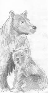 Grizzly Bear And Cub Drawing
