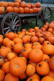 Chesterfield Pumpkin Patch 2015 by Pumpkin Patches Pumpkin Patches In Pumpkins The Pumpkin Patch