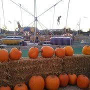 Pumpkin Patch Farm Temecula by Pick Of The Patch Pumpkins U0026 Abc Tree Farms Christmas Trees