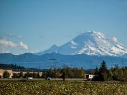 Pumpkin Patch Near Vancouver Washington by Mount Rainier Seen From West Valley Highway Between Kent And