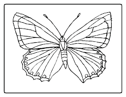 Full Image For Coloring Pictures Of Small Butterflies Printable Pages And Flowers Excellent
