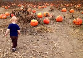 Rombachs Pumpkin Patch Hours by Rombach S Pumpkin Patch Hours In Visalia
