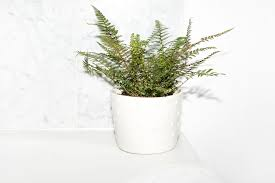 Best Plant For Your Bathroom by 11 Plants For Bathrooms That Feel Spa Worthy Into The Gloss