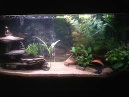 Homemade Lava Lamp Fish Tank by Fiddler Crab U0026 Four Eyed Fish Tank Vivarium Aquarium