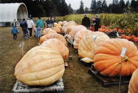 North Plains Pumpkin Patch by Your 2017 Guide To Pumpkin Patches And Harvest Festivals In The