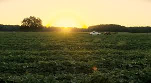 Farmers Shed Lexington Sc by Certified Sc Grown