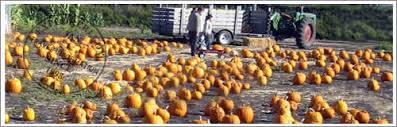 South Reno Pumpkin Patch by Half Moon Bay Pumpkin Patches U0026 Map Half Moon Bay Ca