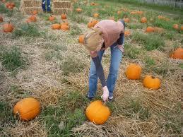 Fleitz Pumpkin Farm Groupon by 100 Fleitz Pumpkin Farm Hours Pics Of The Week Sept 28 To