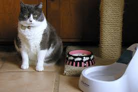 water for cats water bowls for cats cat world