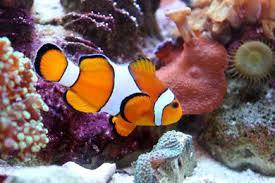 sea carlsbad aquarium carlsbad ca address nearby hotels
