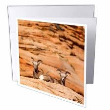 Zion Curtain In Utah by 3drose Desert Bighorn Sheep In Zion Np Utah Usa Greeting Cards