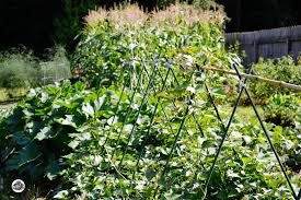 Planning for a Fall Ve able Garden