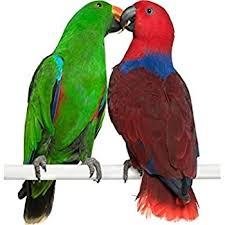 window hochwertige fenstersticker papagei pärchen tiere