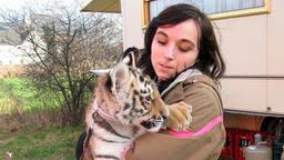 sendung verpasst wildes wohnzimmer tigerbaby im wohnwagen