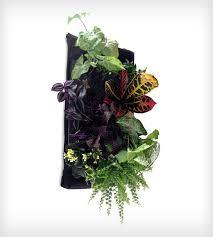 Best 25 Living wall planter ideas on Pinterest