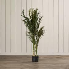 golden palm in pots golden palm tree floor plant in pot