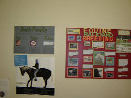 Two Research Works Hypotherapy Directions And Evolving Equine Breeding Practice Student Poster Boards