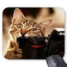 tapis souris chat prix pas cher cdiscount