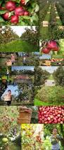 Pumpkin Patch In Yucaipa by 26 Best Apple Orchards Images On Pinterest Orchards Apple