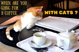 cat coffee cat cafe warsaw when are you going for a coffee with cats miau