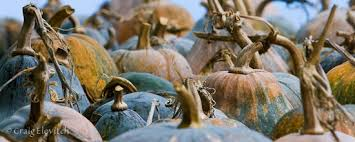 Kohala Pumpkin Patch 2014 by Specialty Crop Profiles Take Control Of Your Own Survival And