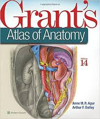 Download Grants Atlas Of Anatomy 14th Edition Pdf For Free