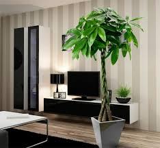 moderne zimmerpflanzen als frische deko fürs zuhause