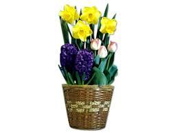 flower bulb gift of the month ships november