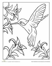 Printable Hummingbird Coloring Pages Animal Kingdom Pagesbooks Pinterest Embroidery And Stenciling