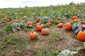 Pumpkin Patch Pittsburgh Pa 2015 piittsburgh spots to explore archives moscato is my mantra