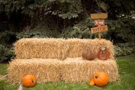 Denver Area Pumpkin Patches by Denver U0027s 16 Best Pumpkin Patches Corn Mazes And Fall Festivals