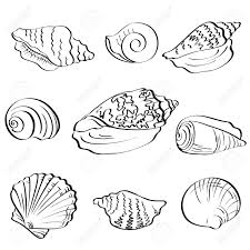 Set different marine seashells black contour on white background Stock Vector