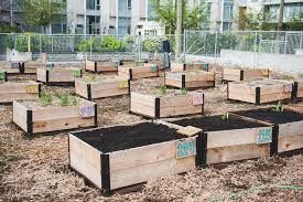 Shifting Growth Raised Garden Beds Community Vancouver