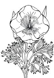 California Poppy Flower Coloring Page Drawing At Free For Personal