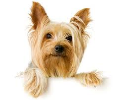hairy situation 4 tips to control excess dog hair shedding in