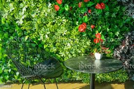 gestalten sie dekorieren sie zierpflanzen und töpfe im wohnzimmer stockfoto und mehr bilder aussicht genießen