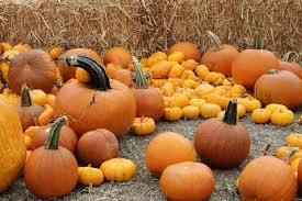 Best Pumpkin Farms In Maryland by Absolute Best Pumpkin Patch In New Mexico To Find Your Perfect