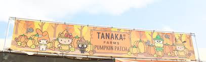Tanaka Farms Pumpkin Patch by Tanaka Farms Hello Kitty Pumpkin Patch My Styled Life
