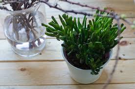 deko mit pflanzen im wohnzimmer leelah