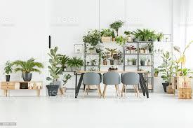 esszimmer mit pflanzen stockfoto und mehr bilder behaglich
