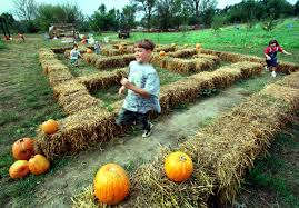 Valas Pumpkin Patch Wedding by Parents Share The Outdoors With Children At Gifford Farm U0027s Fall