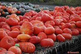 Uesugi Farms Pumpkin Patch by Savsmich Travel Diary Pretty Pumpkin Patches