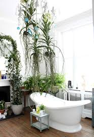Good Plants For Windowless Bathroom by Buy Indoor Plants Online Cheap Bathroom Plant Home Design Ideas